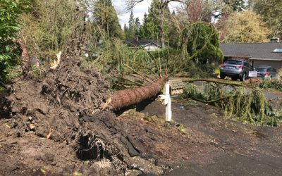 Esssentail Tips for Tree Care and Storms
