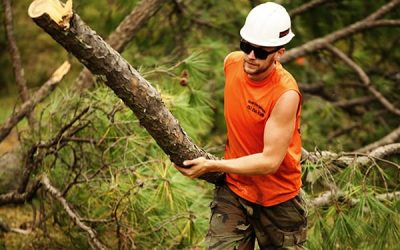 Top 10 Questions to Ask When Hiring a Tree Service