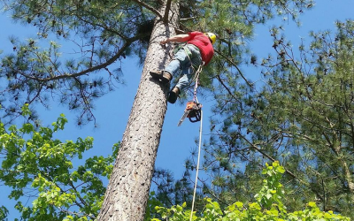 Tree Service Pricing – What Do Tree Services Cost & Why
